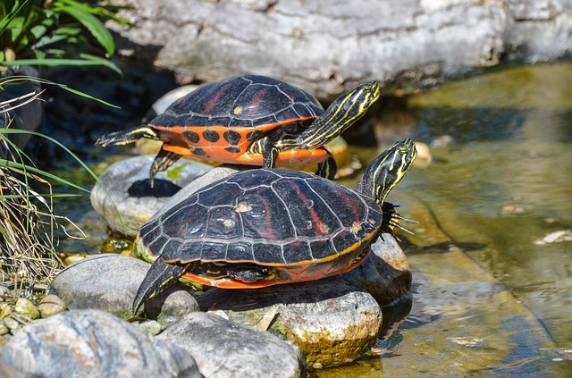 želvičky u vody