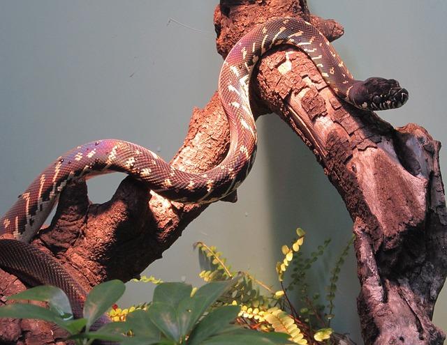 had na stromě