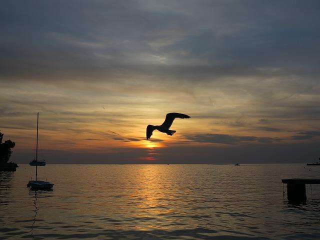 racek, loď, západ slunce, moře